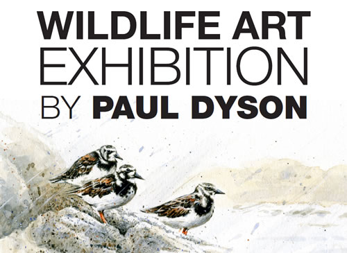 Wildlife art exhibition poster