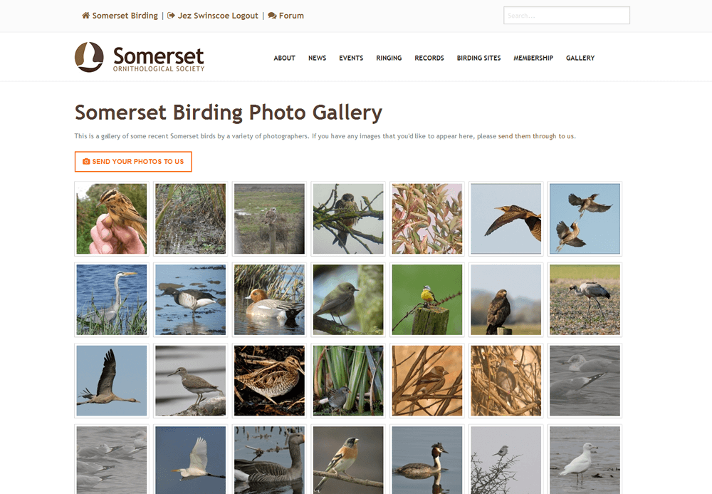 Somerset Ornithological Society Photo gallery with facility for visitors to submit photos