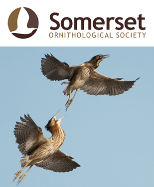 Somerset Ornithological Society